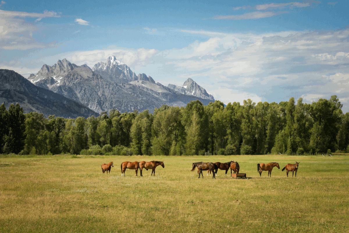 paarden in de bergen